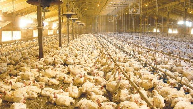 Las exportaciones de carne aviar acumuladas entre enero y julio de este año cayeron un 29,1% en dólares frente a 2015.