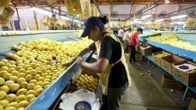 Resultado de imagen para Brasil reabrió su mercado de cítricos a la Argentina