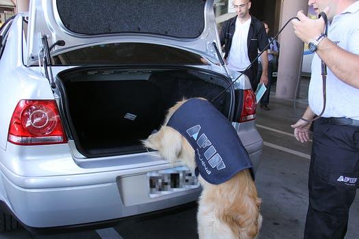 Un criadero en la provincia de Buenos Aires se encargará de disponer los 300 perros que requiere la AFIP. Foto: LA NACION / Darío del Olmo
