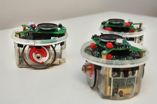 Los robots e-pucks, los elegidos por el ITBA para el desarrollo de las materias de robótica. Foto: LA NACION / Sebastián Rodeiro
