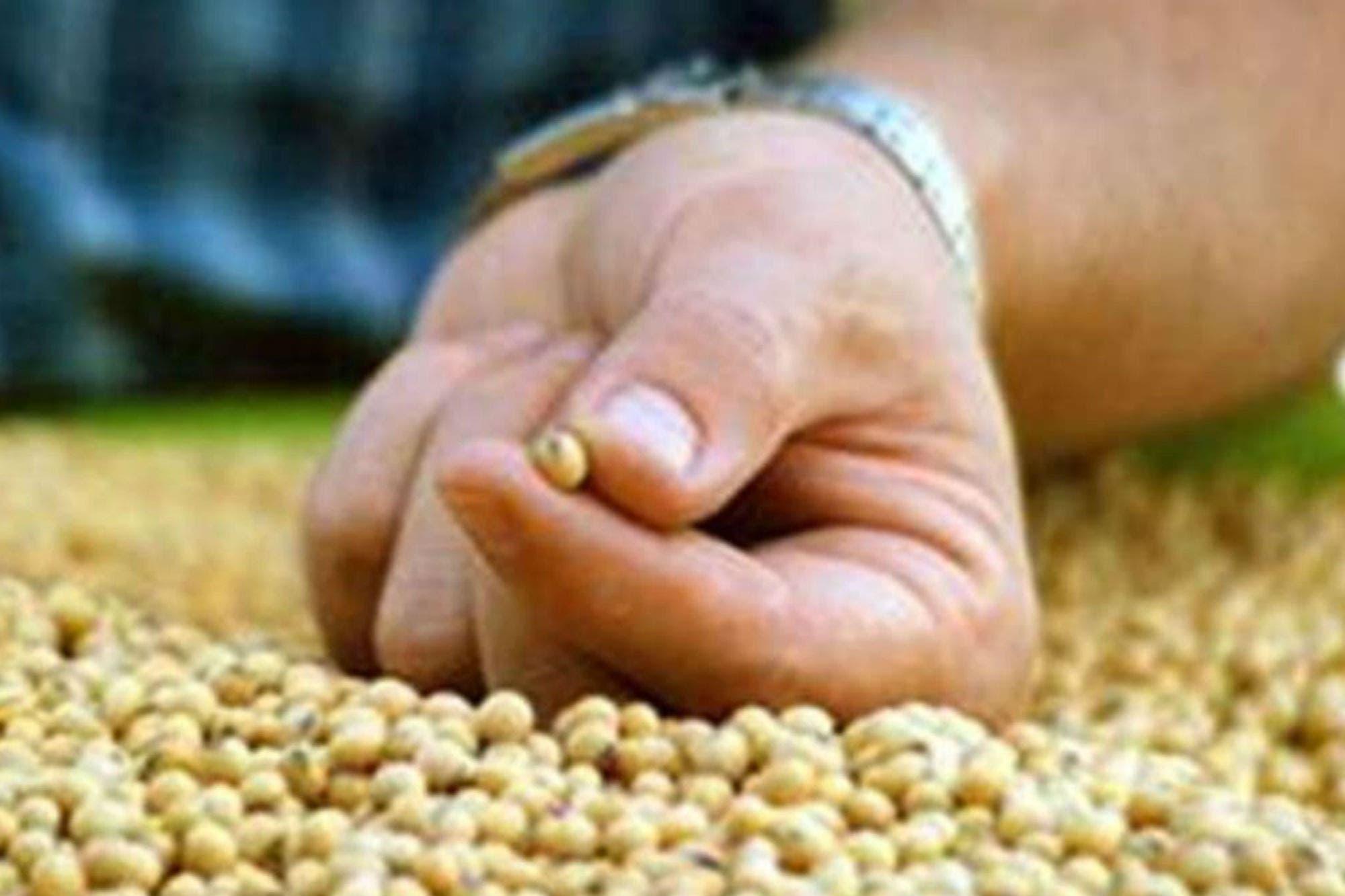 Monsanto desistió de un juicio contra un municipio que le impidió instalar una planta