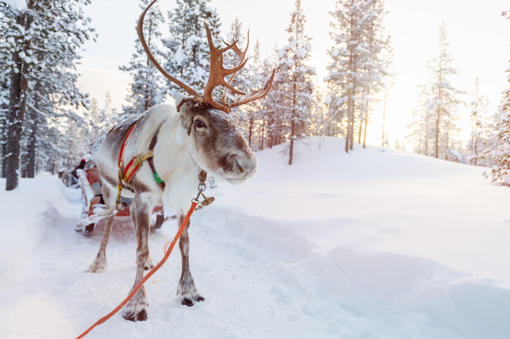 Cómo dibujar un reno navideño de 127 kilómetros de largo con la bici