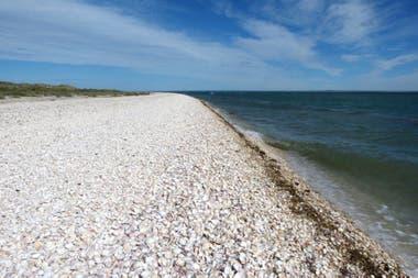 Punta Perdices, abundancia de caracoles en las afueras de Las Grutas