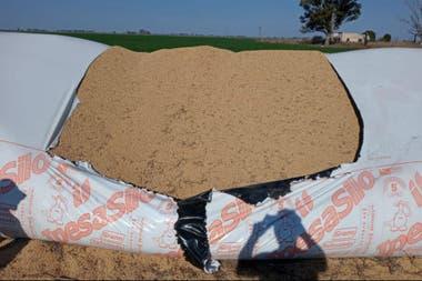 El silobolsa que fue roto para robar al menos 30.000 kilos de soja