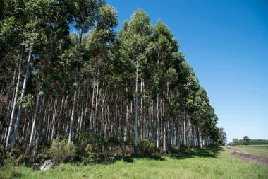 En el primer semestre de 2020, los precios del eslabón primario, representados por la madera en rollo producida en las plantaciones forestales, se ajustaron entre un 20% y un 47%.