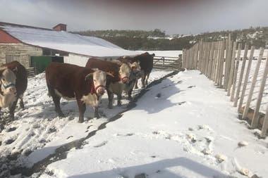 Durante el invierno, nieve y hielo