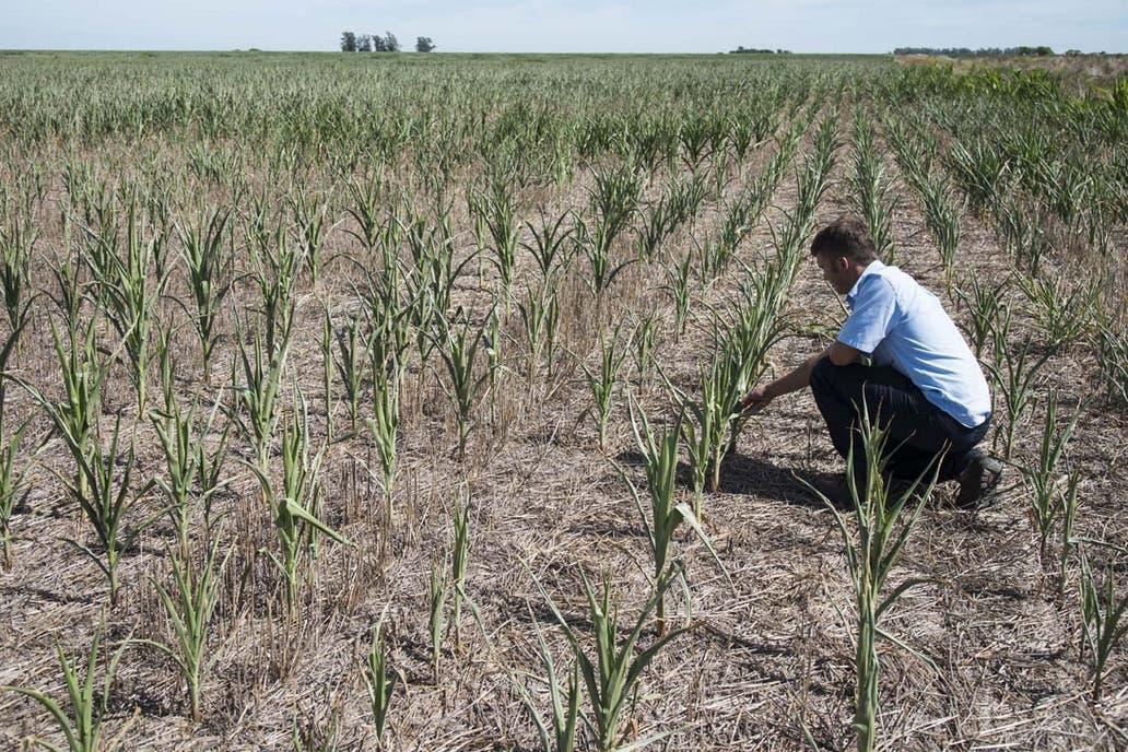 """El ministro atribuyó al """"cambio climático"""" el contraste entre inundaciones y falta de lluvias que padece la pampa húmeda; prevén mermas de hasta el 46% en soja"""