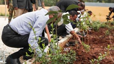 La meta del proyecto es sembrar cuatro mil millones de árboles.