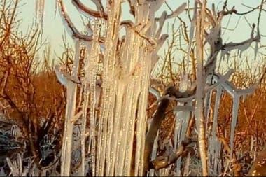 Se han visto afectados los almendros, el durazno, la pera y el damasco