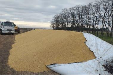 La recuperación del cereal no es completa