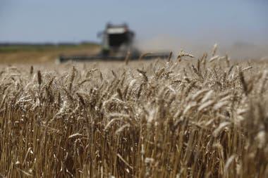 Sobre 17 millones de toneladas, los productores ya vendieron el 51% de la cosecha