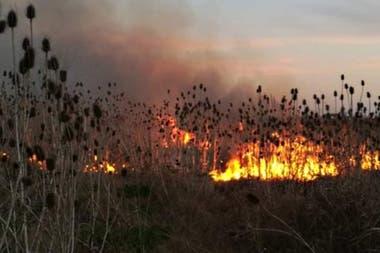 Los incendios en el predio del ex-aeroclub de Laferrere