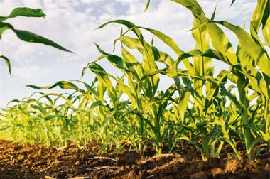 Los suelos son eje de la producción y demandan su cuidado