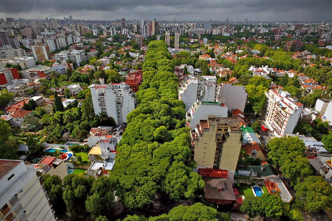 Los árboles a lo largo de la avenida Melián, en Belgrano