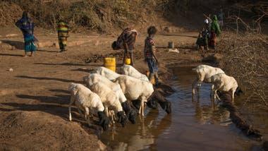 Las sequías afectan a millones de personas en Etiopía.