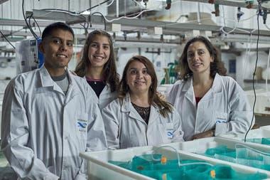 En Puerto Madryn investigadores encontraron una molécula en erizos de mar para combatir el coronavirus.