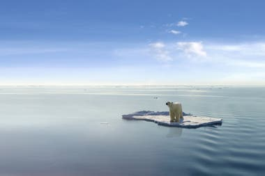 Frente al calentamiento global, miles de especies, entre ellas los osos polares, ven peligrar su espacio vital