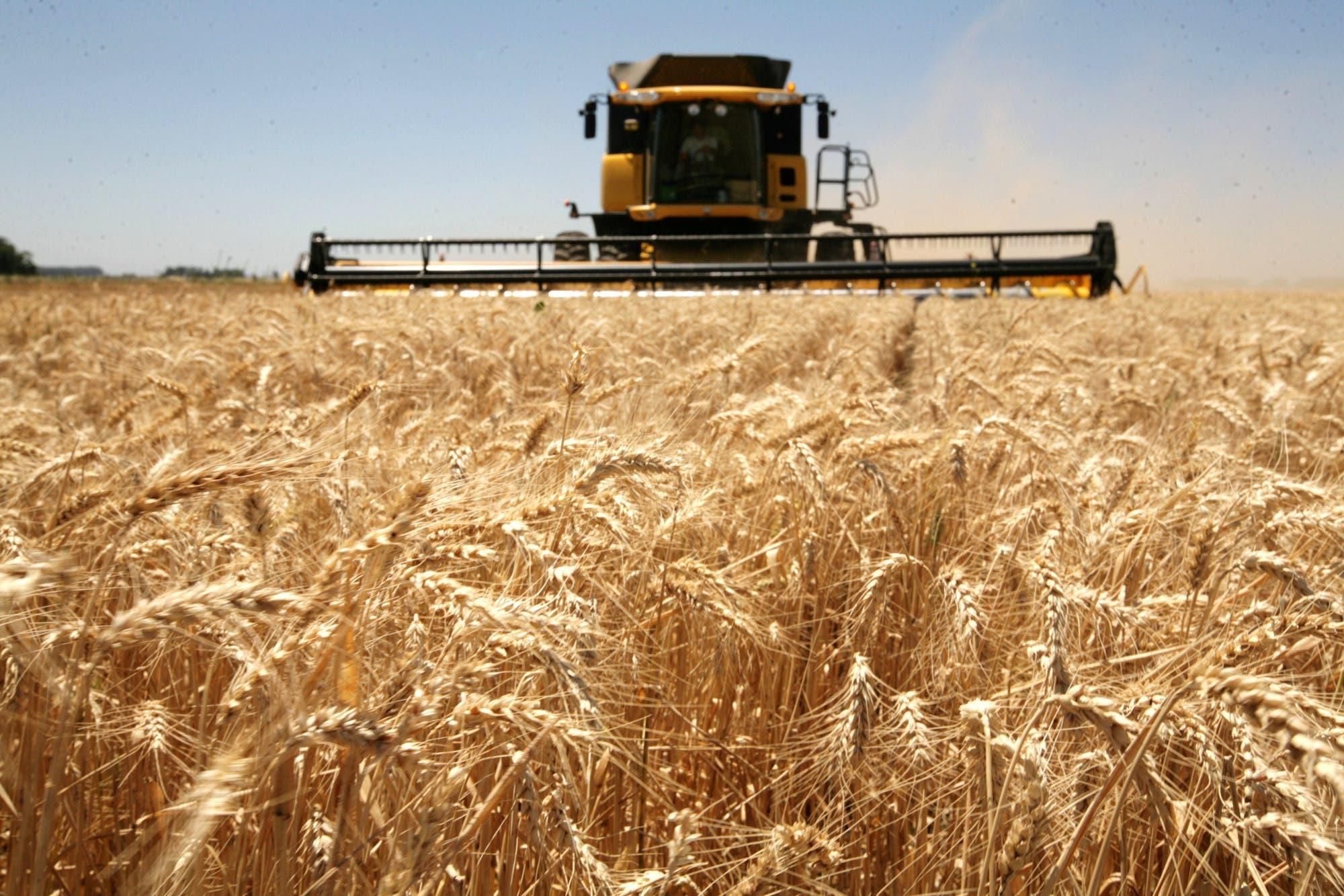 Mercado expectante a la evolución de la cuota de trigo extra Mercosur de Brasil