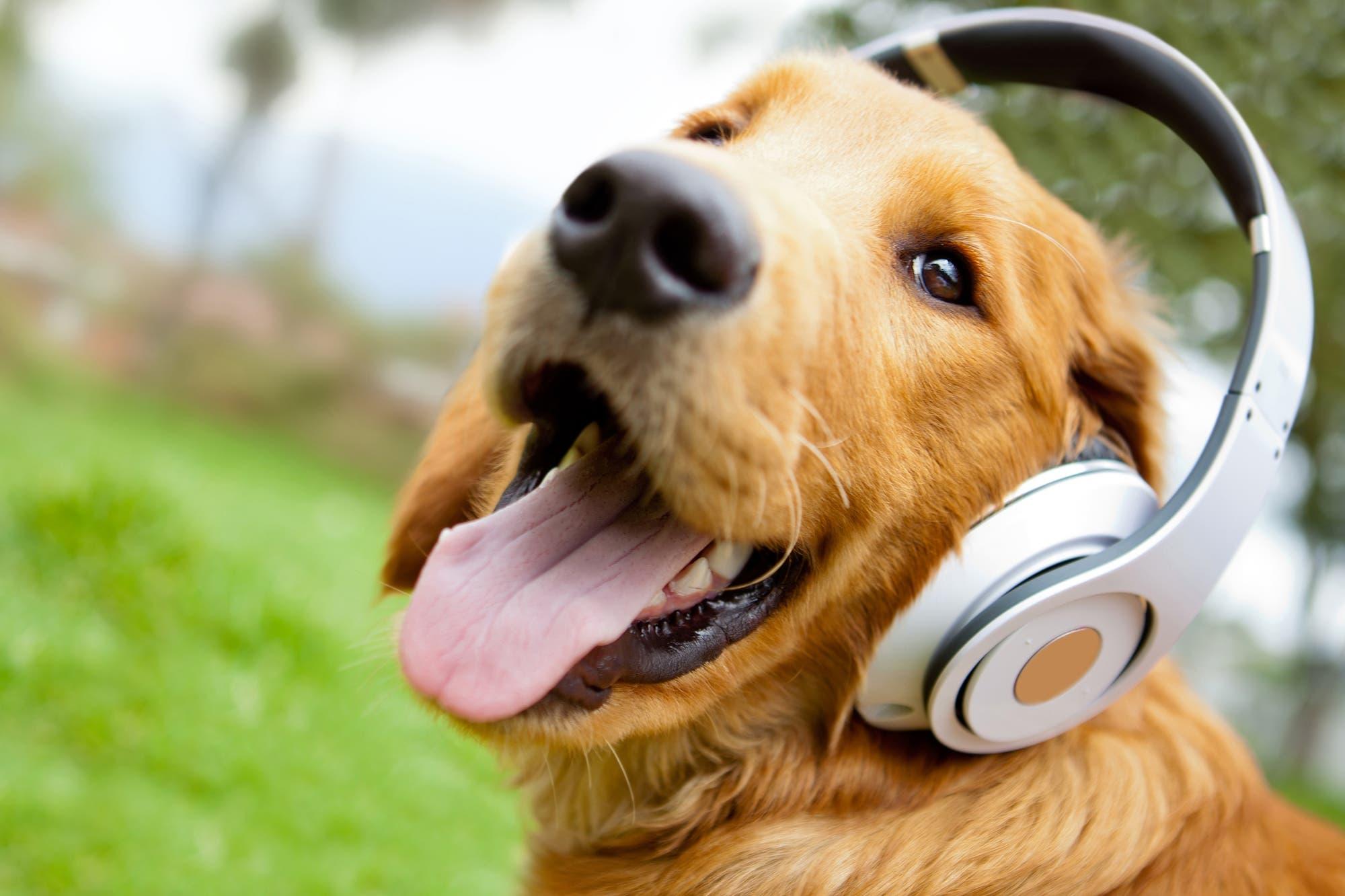 Spotify lanza las listas de reproducción para mascotas, según el animal y su personalidad