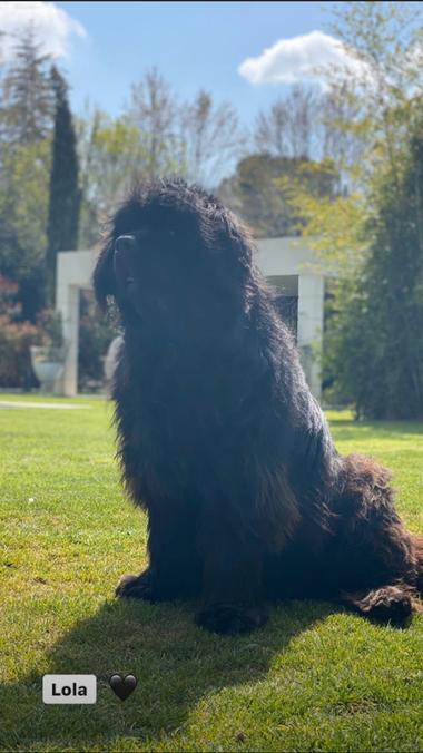 Lola, una de las perras del futbolista brasileño