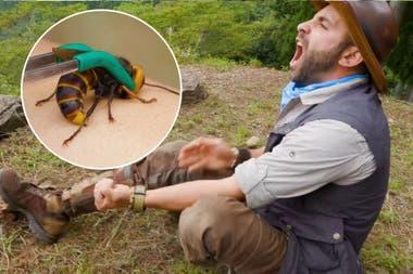 Algunos días antes de que Estados Unidos mostrara su preocupación por estos insectos, mostró cómo se siente el dolor agudo. Fuente: New York Post.
