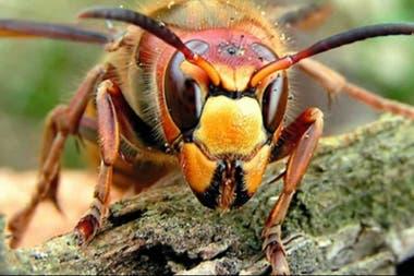 Estos insectos pueden medir hasta 6 centímetros. Fuente: Business Insider.
