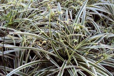 Los cubresuelos son los mejores aliados allí donde no crece el césped o se dificulta su mantenimiento. Protegen los suelos desnudos y facilitan las tareas del jardín.