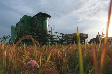 La inversión para el arroz y la alfalfa será de $12 millones