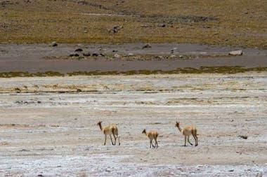 El desierto de Atacama es el más árido del mundo