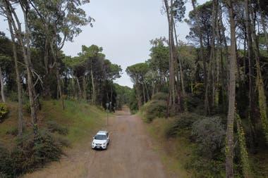 La zona es un gran bosque