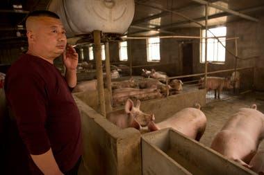Zhang Shuai, encargado de la cría de cerdos en una granja en Panggezhuang, observa los animales