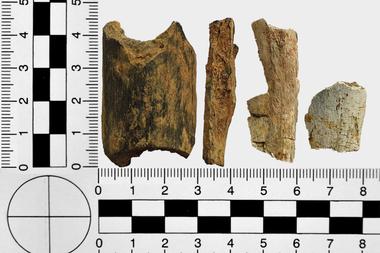 Parte de los huesos hallados estaban convertidos en ceniza