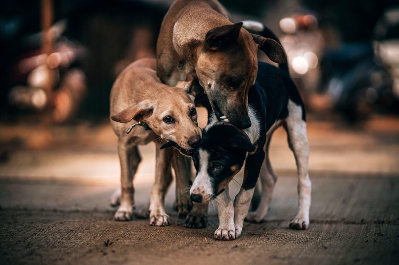Puerto Deseado: dieron marcha atrás con la eutanasia para perros y gatos callejeros