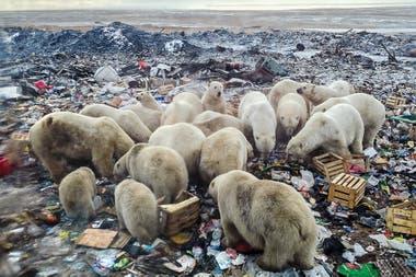 El cuidado del entorno y la convivencia con las demás especies serán clave