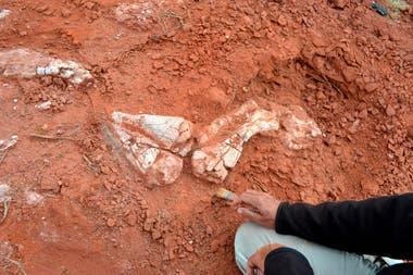 Los restos de dos especímenes de una nueva especie de dinosaurios herbívoros de 205 millones de años de antigüedad