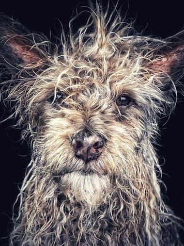 """""""Django es un Terrier, nacido y criado en un monasterio budista en la provincia norteña de Hunan, China. A Django le gustan los largos paseos por la playa y escuchar a Miles Davis"""""""