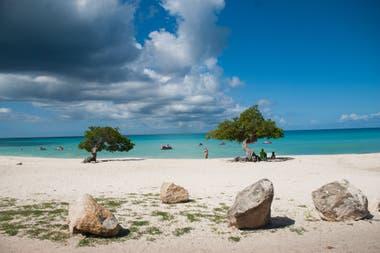 Los árboles fofoti, típicos de Aruba