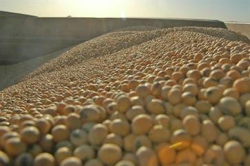 El USDA redujo de 40 a 39 millones de toneladas el volumen de la actual cosecha de soja, pero proyectó en 56 millones la producción 2018/2019
