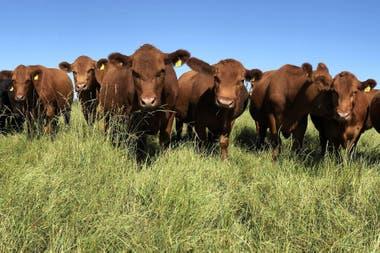 No se usan agroquímicos ni fertilizantes en el campo