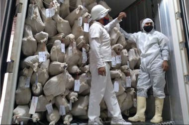 El frigorífico cordobés Los Pinitos comenzó a exportar carne caprina a Sri Lanka desde el departamento Cruz del Eje, en el norte provincial.