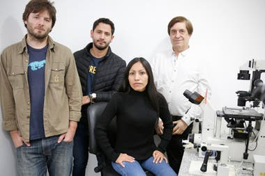 El equipo de la Facultad de Agronomía de la UBA que está preparando la clonación: Adrián De Stéfano, Matteo Duque, Minerva Yauri Felipe y Daniel Salamone