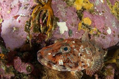 La zona norte de Yaganes presenta fondos de profundidad con una abrupta topografía, un hábitat ideal para especies de macro-invertebrados de profundidad, como corales, gorgonias y esponjas, que a su vez proveen hábitat para invertebrados móviles y peces