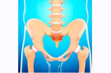 El coxis, la última pieza ósea de la columna vertebral, es uno de nuestros vestigios evolutivos