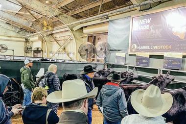 """""""Cattlemen's Congress Oklahoma 2021"""" es la exposición donde un ternero con genética de La Rubeta se vendió el 50% a US$180 mil"""