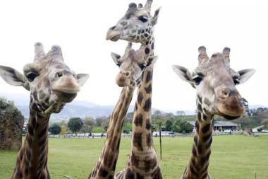 El 18 por ciento de los vertebrados están actualmente en peligro de extinción, señaló el informe