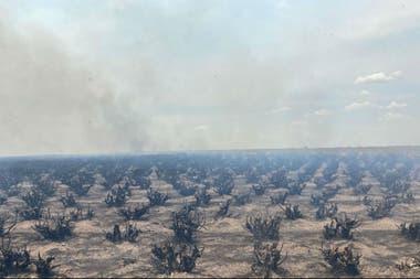 Así quedó un campo, tras el paso del fuego en Corrientes