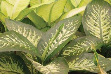 Cu les son las plantas comunes y muy t xicas que hay que for Como se llaman las plantas ornamentales