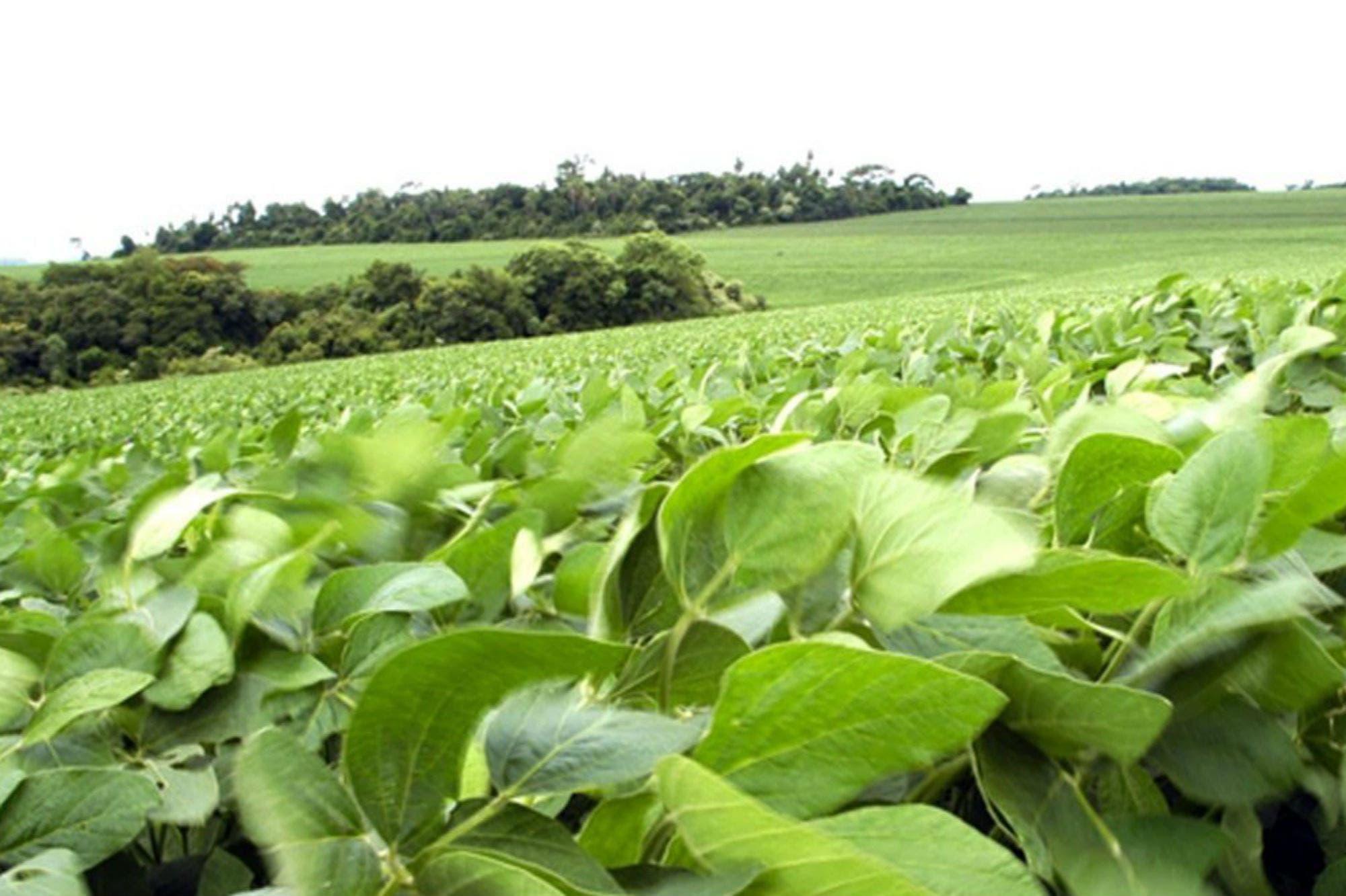 Cuáles son las provincias líderes en producción de soja, maíz y trigo según el Censo Agropecuario