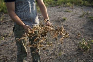 """David Montgomery: """"Para 2100 habremos erosionado un tercio de los suelos"""""""