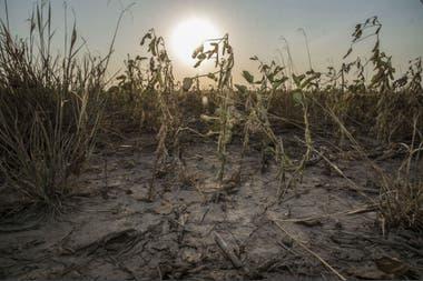 """Rattan Lal: """"Será necesaria una eco-intensificación, favorecer las micorrizas, crear suelos que supriman enfermedades"""""""